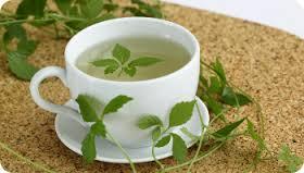 jiaogulan-tea