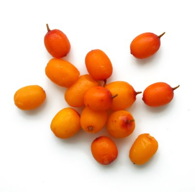 sea-buckthorn-21